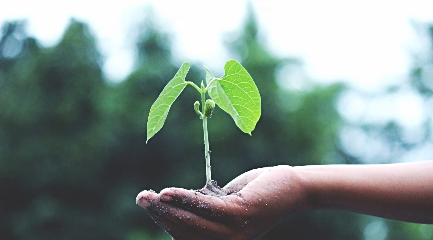 Person holding plant in their hand