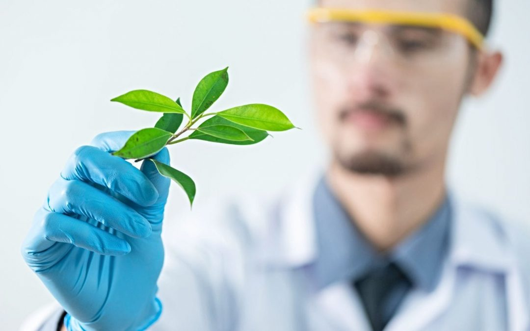 Scientist in background holding green-leafed plant