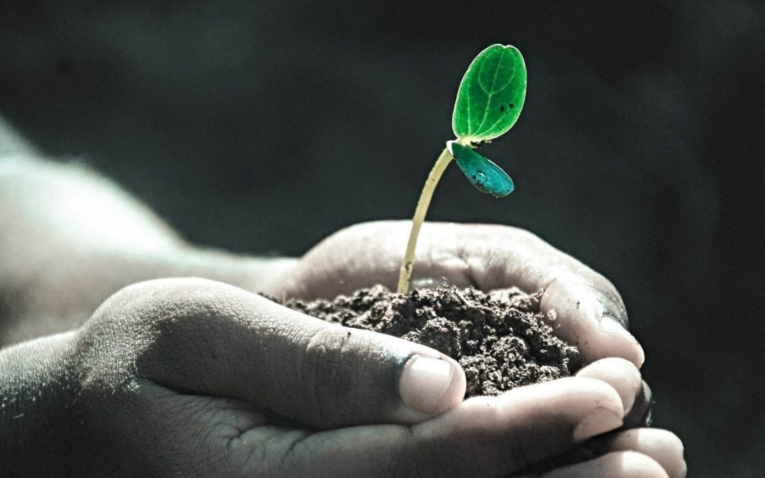 2019 Year in Review: Sowing Seeds Now and for the Future