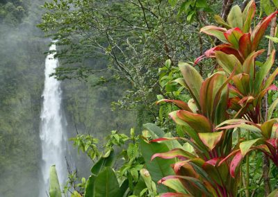 A waterfall in Hawaii