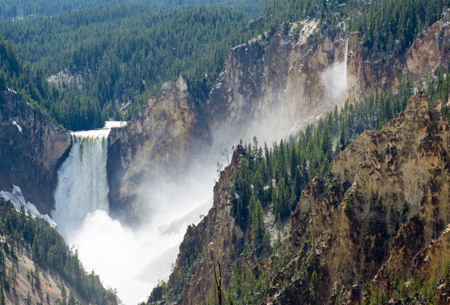 Yellowstone and Grand Teton National Parks Good Faith Experience: August 7-14, 2021