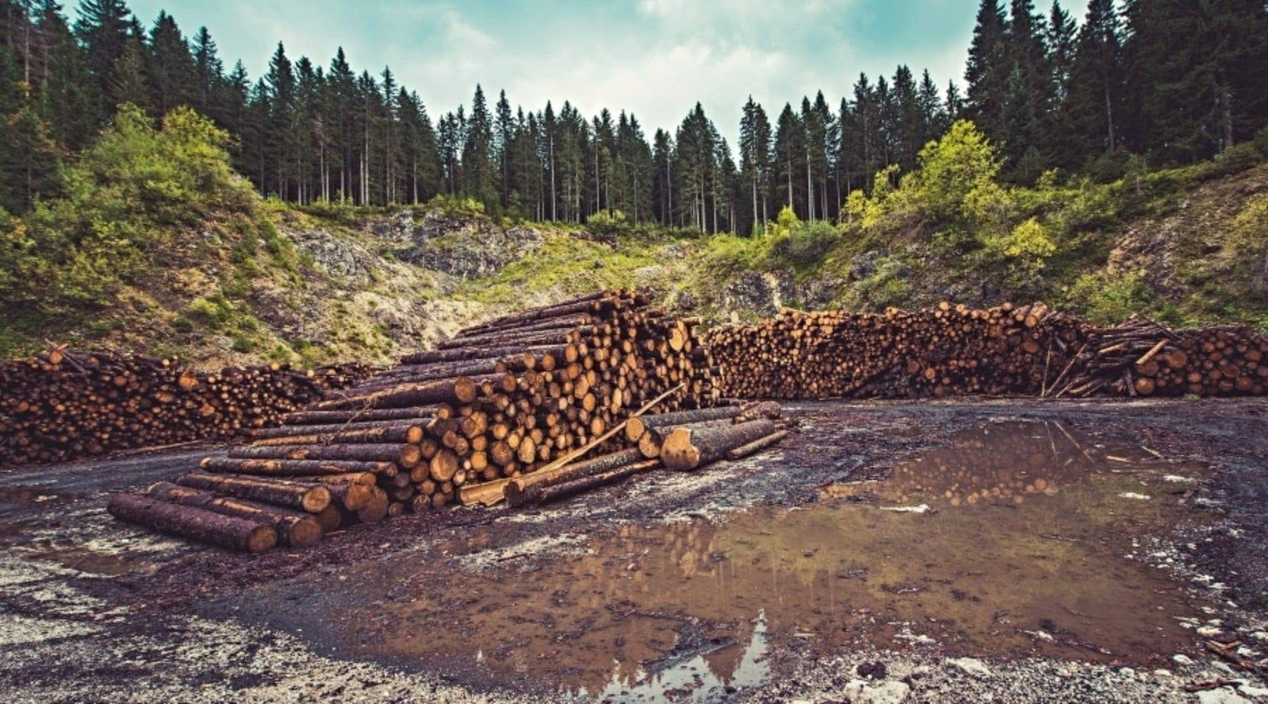 Global Deforestation Slows But Millions of Acres Still Lost