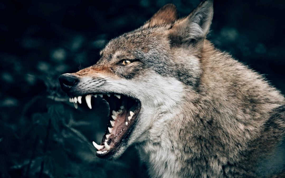 Leadership Styles: Jesus vs. The Wolves