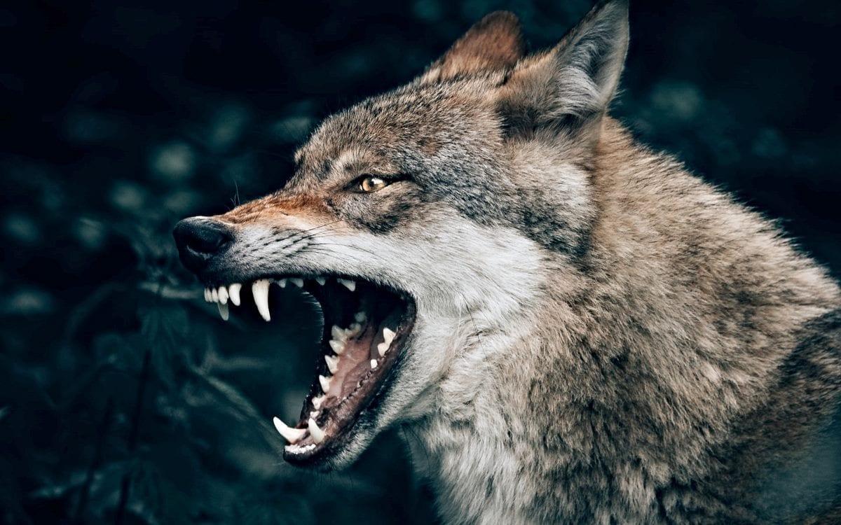 Leadership Styles: Jesus vs. The Wolves