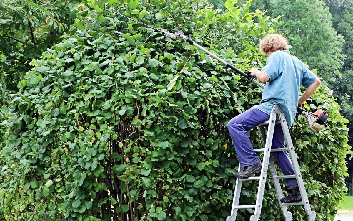 Gov't Has Failed Us. Time for Some Pruning.