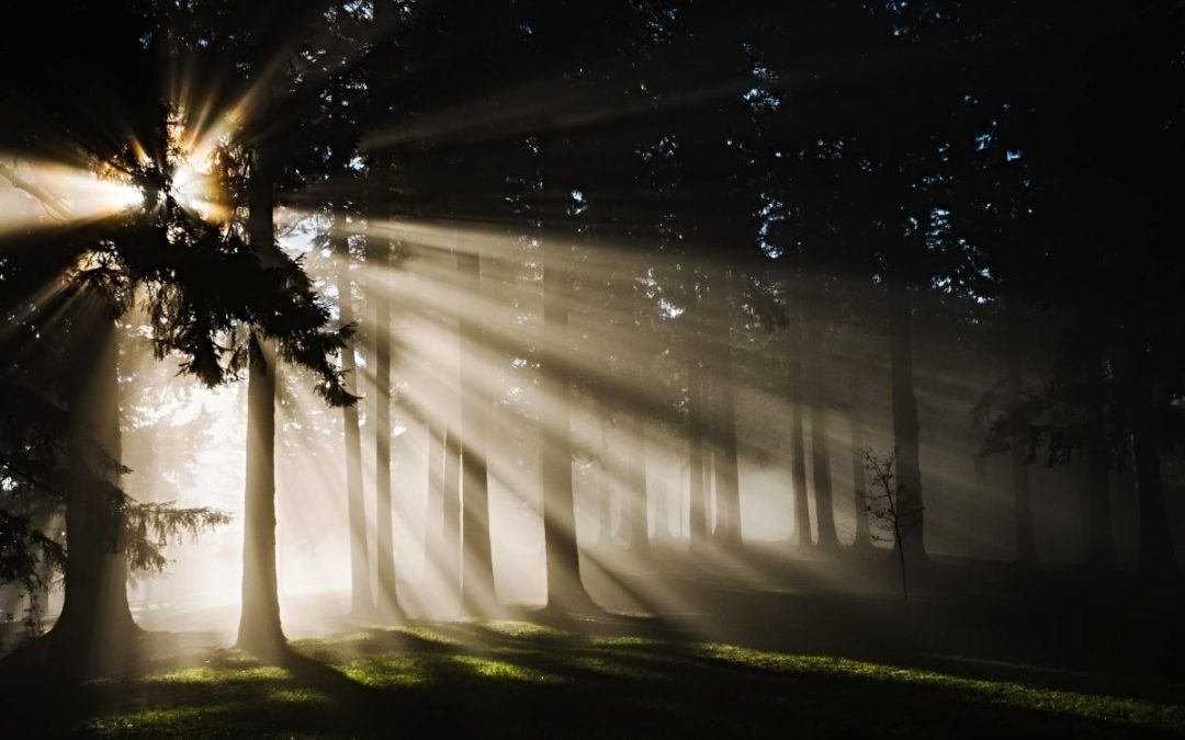 Sunlight coming through trees in a forest