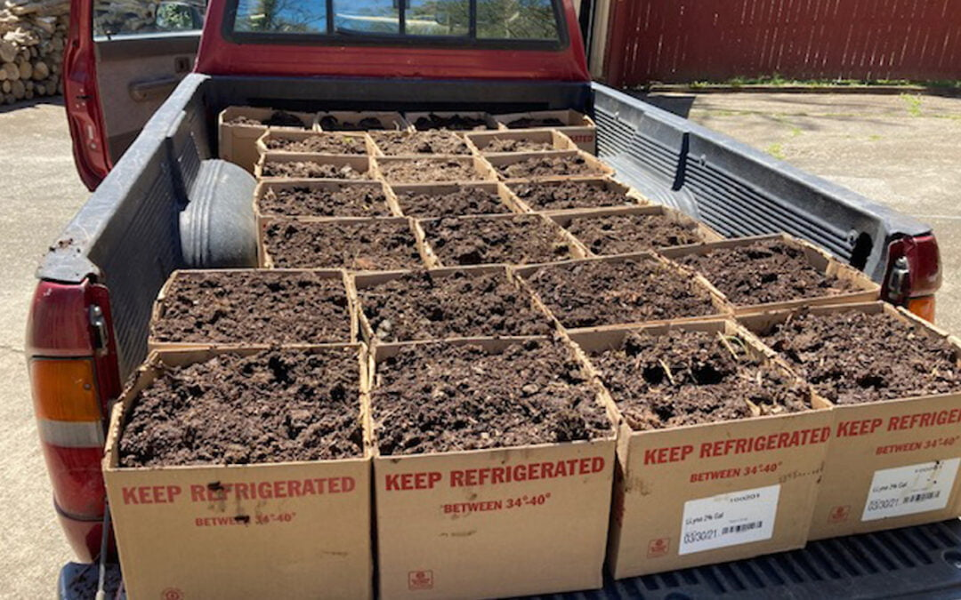 A truck bed filled with boxes of compost