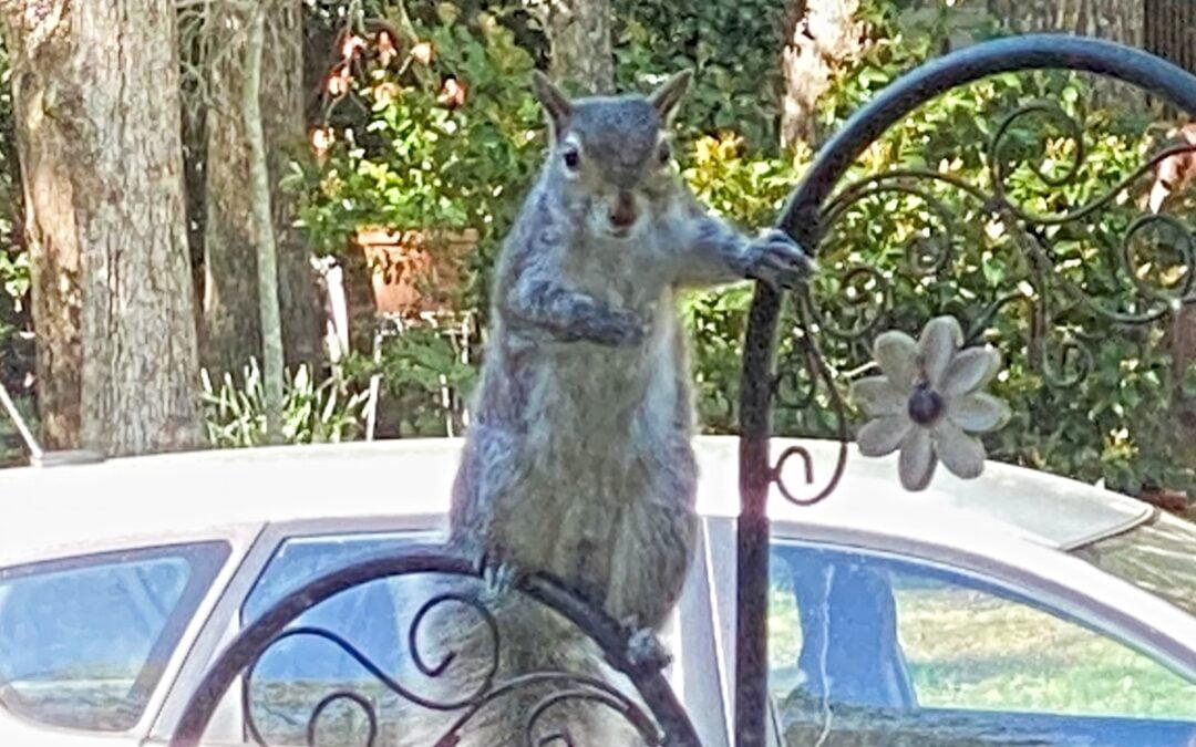 A squirrel sitting on a bird feeder pole.