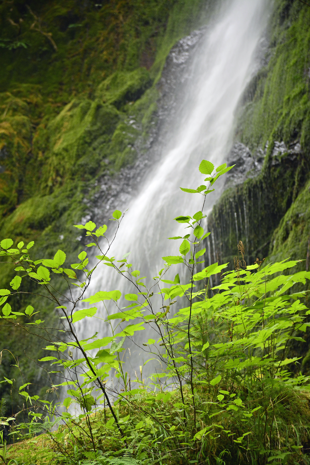 A waterfall with green shrubs in the foreground.