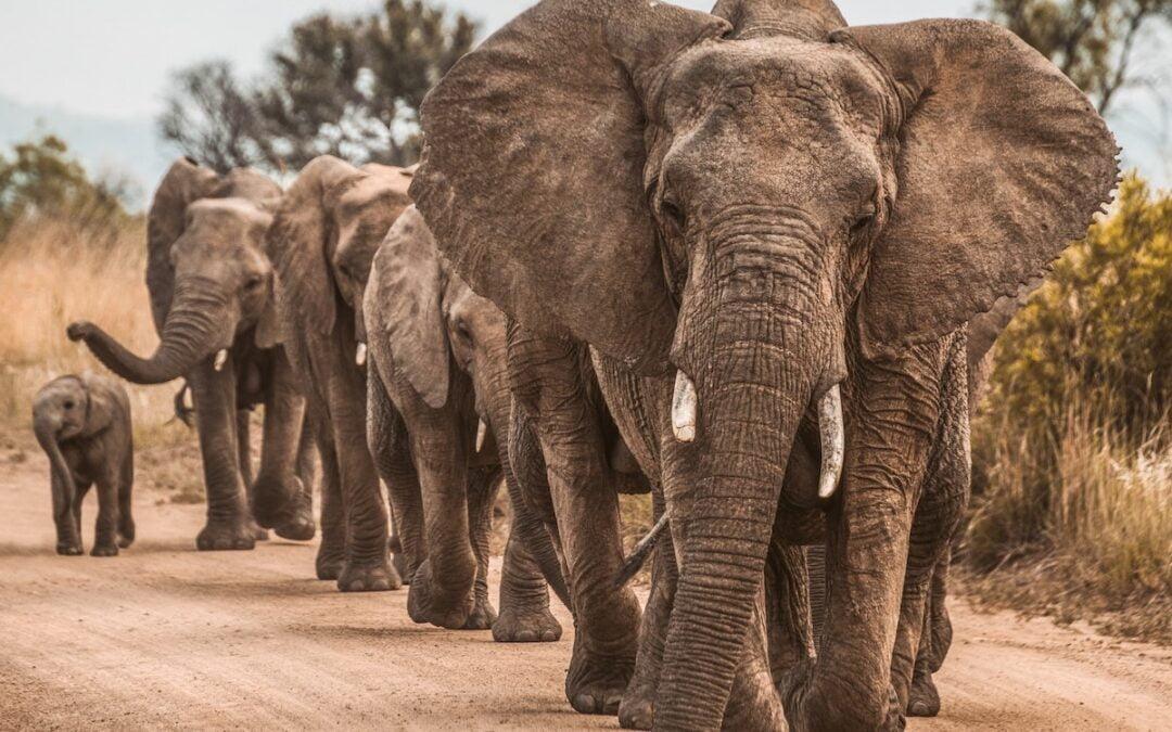A herd of elephants walking down a dirt road.