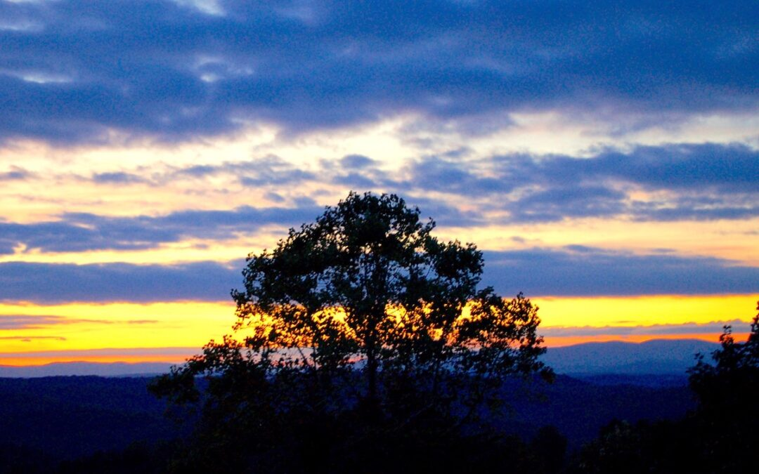 The silhouette of a tree with a multicolored sky at sunset.